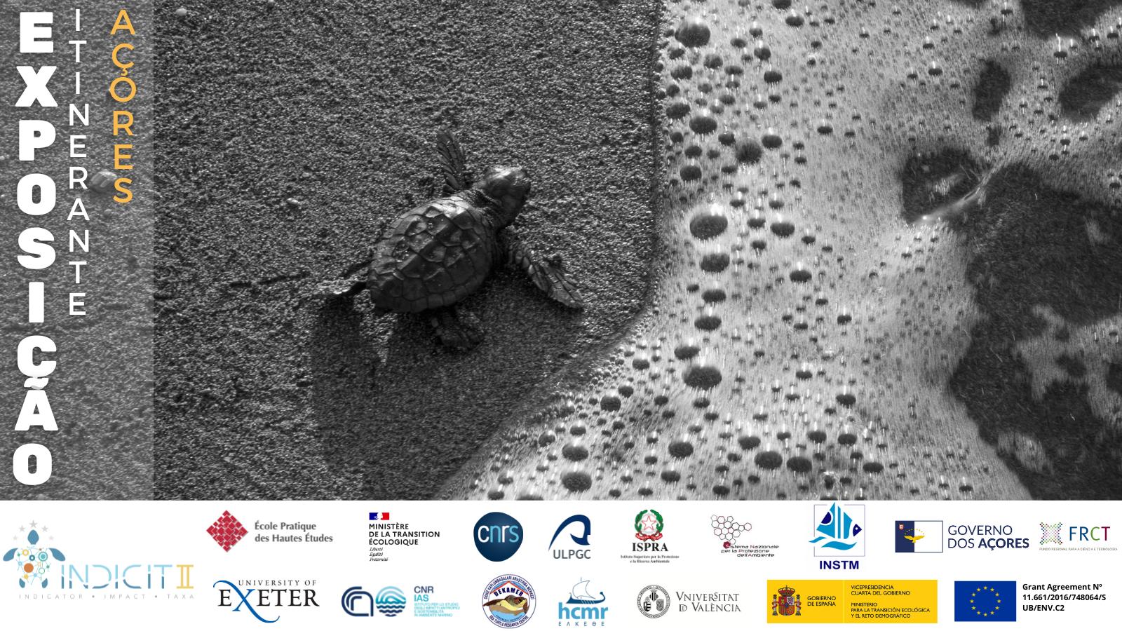 Governo dos Açores promove exposição itinerante sobre o impacto do lixo marinho na biodiversidade